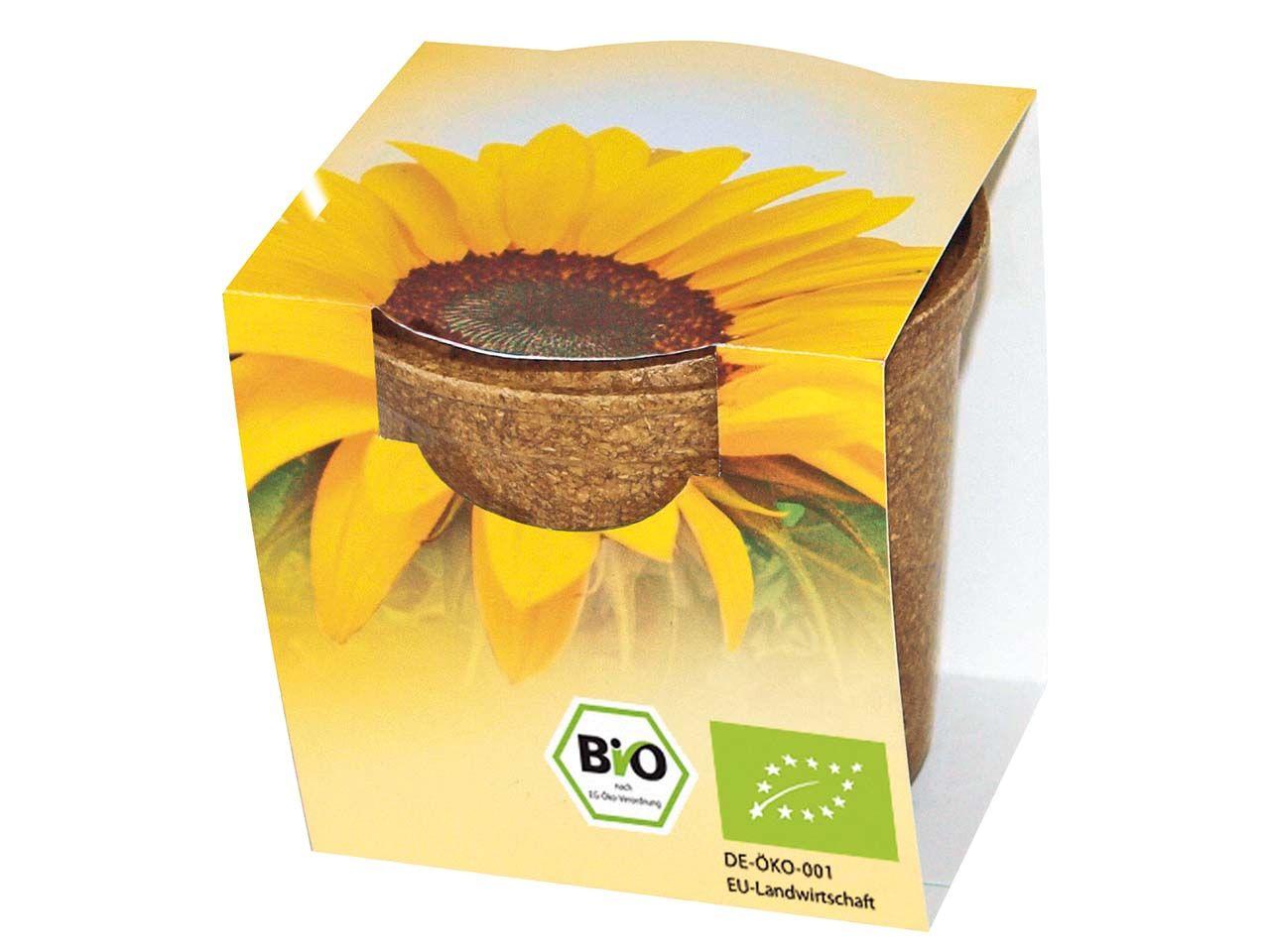 Bio Sonnenblumen im Easy Wachstumstopf 1300 Bio Sonnenblume
